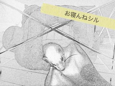 シル 絵 2011-05-13.jpg