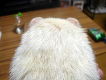 耳シル.jpg